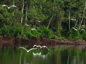 Conocer Reserva Nacional Pacaya Samiria, Perú